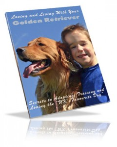 Loving Your Golden Retriever
